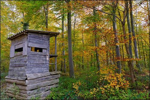 La petite cabane dans les bois