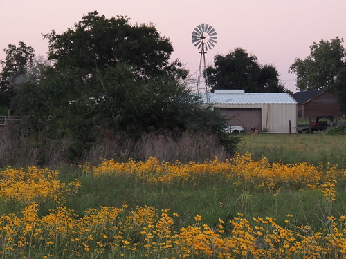 sunset windmill field silhouette barn rural texas country wildflowers centuryold yellowtexaswildflowers