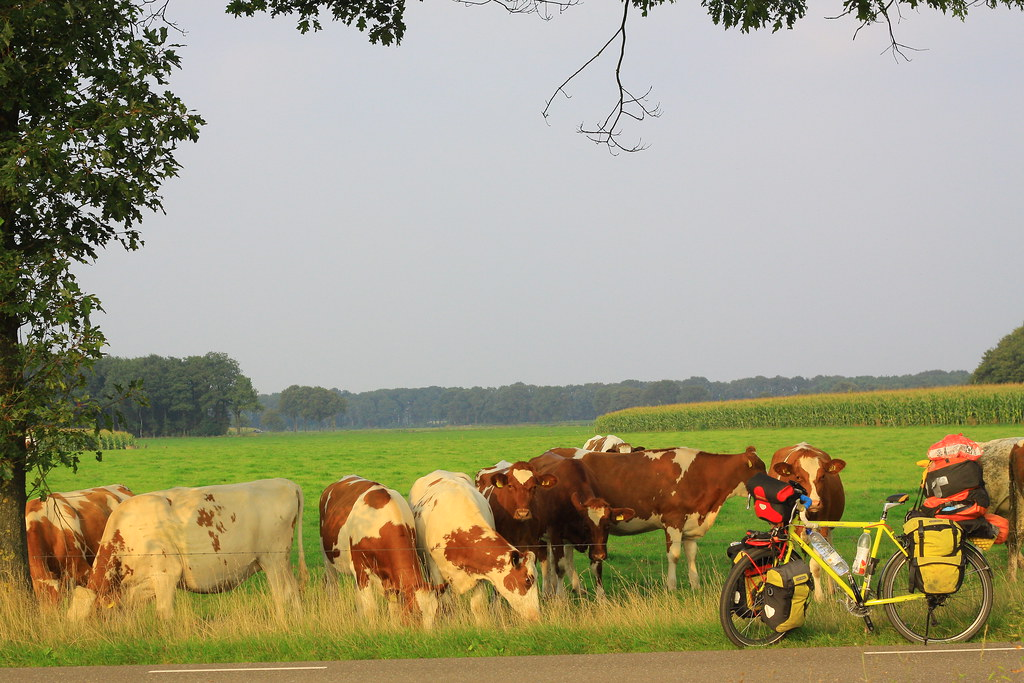 The Netherlands005
