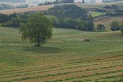 Turning the hay - Photo of Peyrefitte-sur-l'Hers