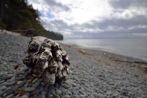 wood morning sea canada tree nature wet water beauty island islands coast nikon flickr solitude day waves bc britishcolumbia decay tide wave pebbles september vancouverisland driftwood coastal coastline naturalbeauty ultrawide tidal mothernature sooke secluded d800 frenchbeach uwa straitofjuandefuca riverjordan paulwilliams frenchbeachprovincialpark thebeautyofnature ultrawideanglelens nikkor1424mm nikon1424mm nikond800 frenchbeachbc nikonholytrinity despitestraightlines driftwoodonabeach ilobsterit
