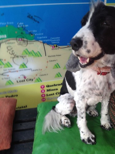 The sweet dog who lives at The Dreamer - Santa Marta