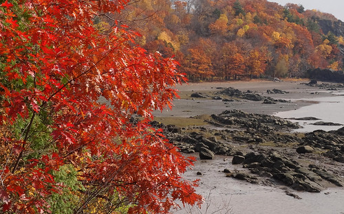 park autumn color fall automne quebec plage parc couleur gagnon stefoy