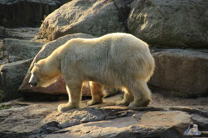 Berliner Zoo 66