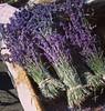 Lavender, 10/17/14