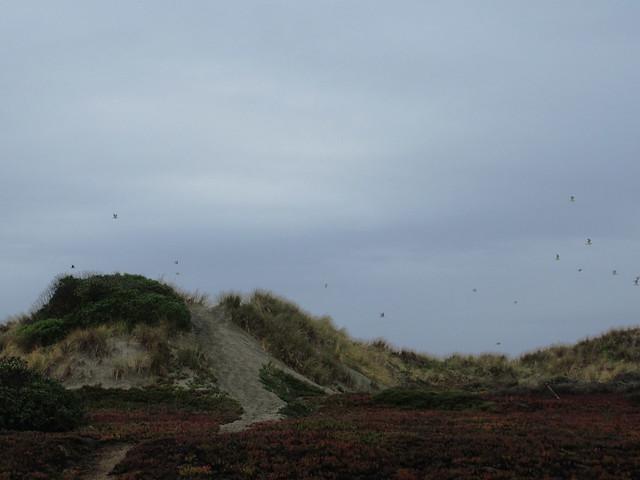 Dunes at Ocean Beach, San Francisco (2014)