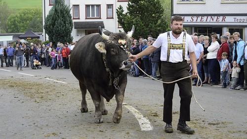 animal geotagged schweiz switzerland cow nikon suisse landwirtschaft muni bauer che bulle senn nikonshooter urnäsch viehschau kantonappenzellausserrhoden nikonschweiz geosetter d5300 capturenx2 ponte1112 nikonswitzerland nikkor18200vrll viewnx2 geo:lat=4731744317 geo:lon=928384857