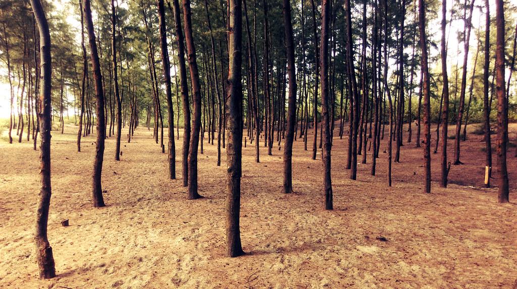 Pine Forest - Sonadia Island