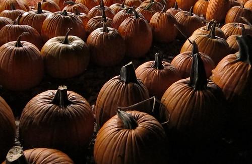 DarkPumpkins2
