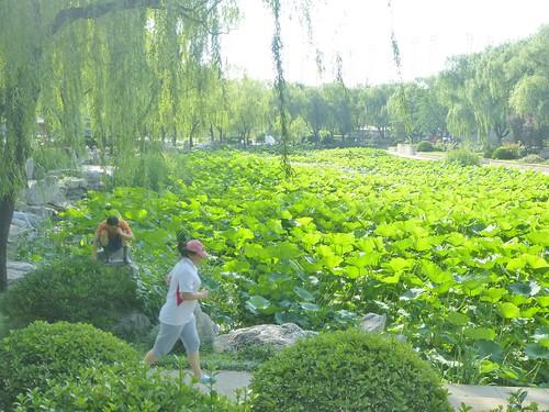 Beijing-Parc Longtan (27)