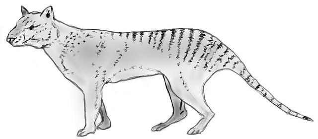 Thylacinus_potens