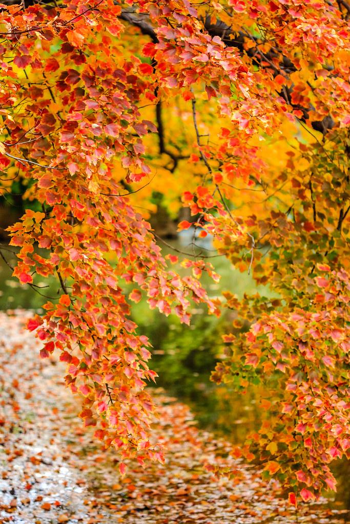 Laurels of autumn [Flickr]