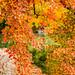 Laurels of autumn