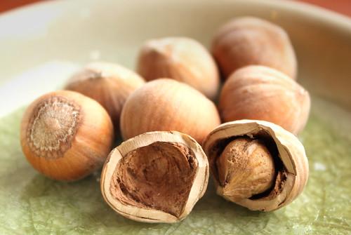 Hazelnuts from the garden