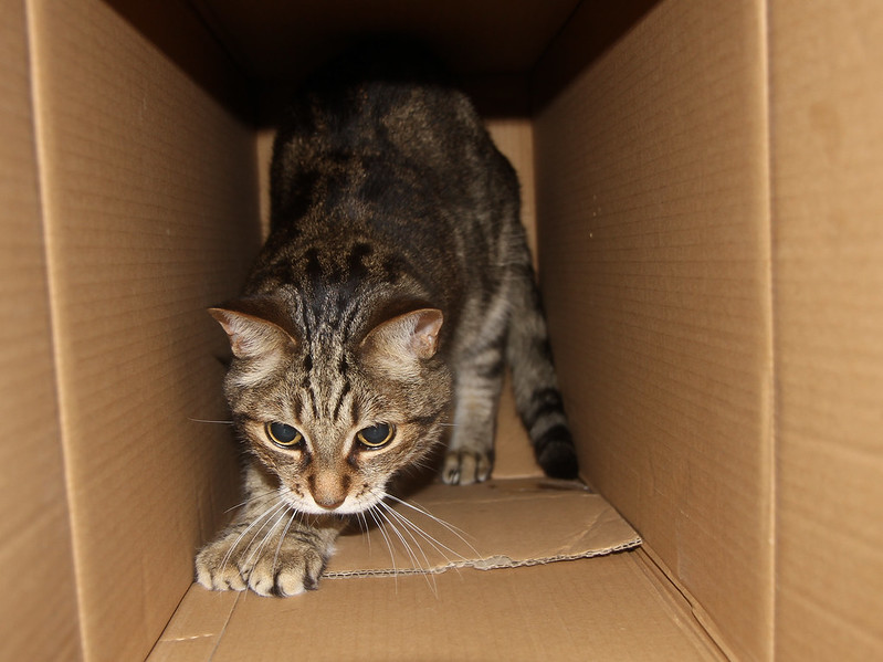 skitty box pounce