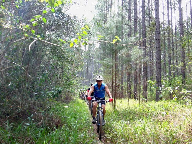 Pine Forest Single Track