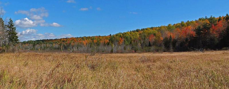 Meadow - Sheepscot Headwaters Trails 10-12-14