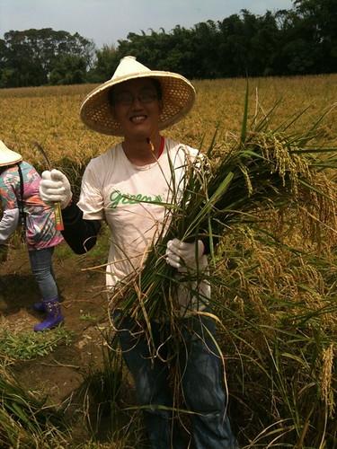 舉辦產地之旅活動,到龍德米庄農友的田割稻 。