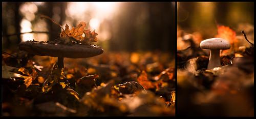 Autumnal glory // 03 11 14
