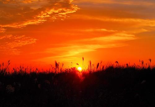 sunset sunsetlight silvergrass wildfield