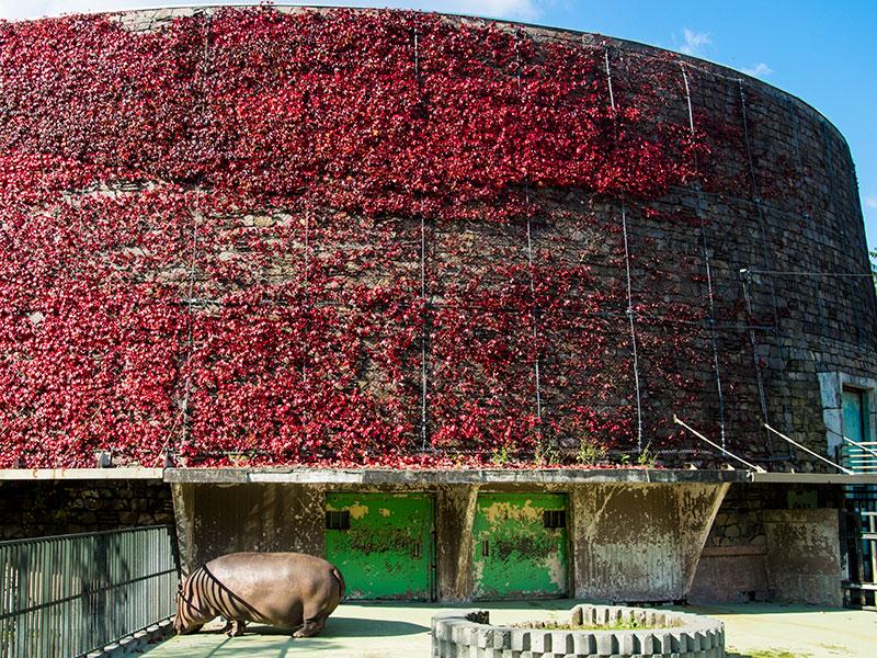 円山動物園のザンと紅葉