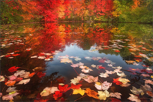 autumn trees red reflection leaves maple pond massachusetts newengland patrick foliage zephyr