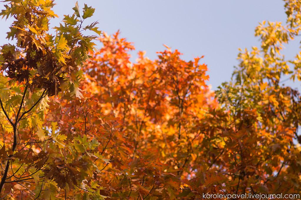 Autumn-192