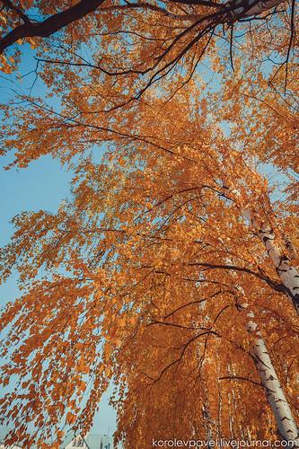 Autumn-036