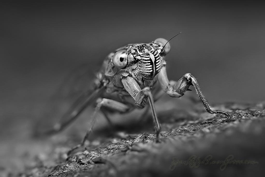 Monochrome - Cicada