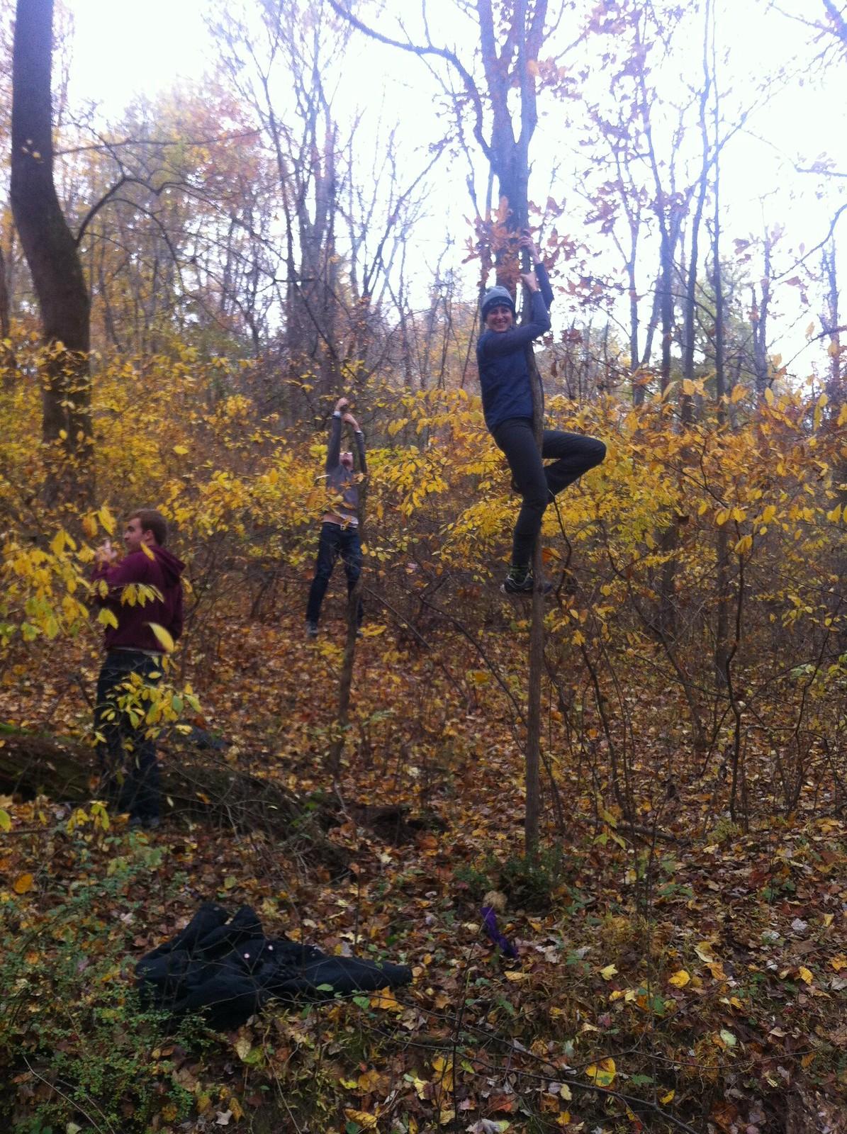 tree-riding