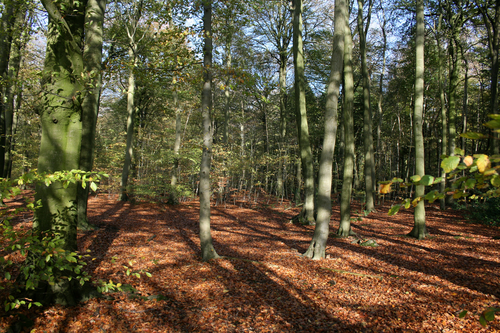 Monkton Wood