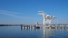 Port of Oakland Crane Horses