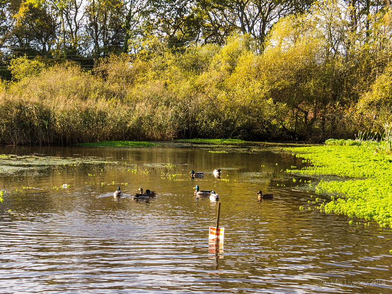 Sunshine and ducks on the lake