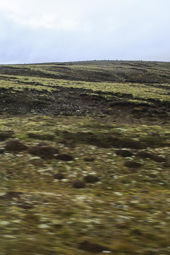 Iceland_Spiegeleule_August2014 120