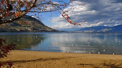 lake canada bird beach landscape britishcolumbia okanagan gulls panasonic penticton okanaganlake lx5 nigeldawson dmclx5 jasbond007 copyrightnigeldawson2014