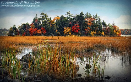 park autumn trees red lake canada green fall water yellow reeds landscape island pretty novascotia scenic textures colourful shubiepark omot cans2s exhibitionoftalent masterclassexhibition masterclasselite