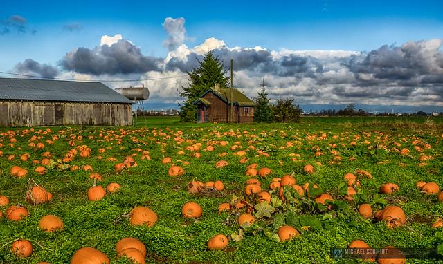2014-10-26 Ladner Westham Island Pumpkins 13