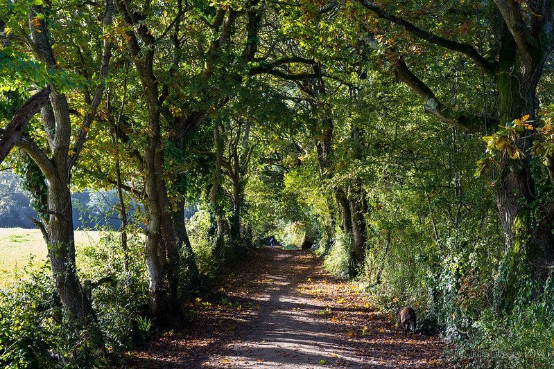 The path to Hamworthy