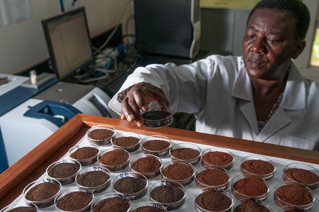 Selian Agricultural Research Institute, Arusha, Tanzania