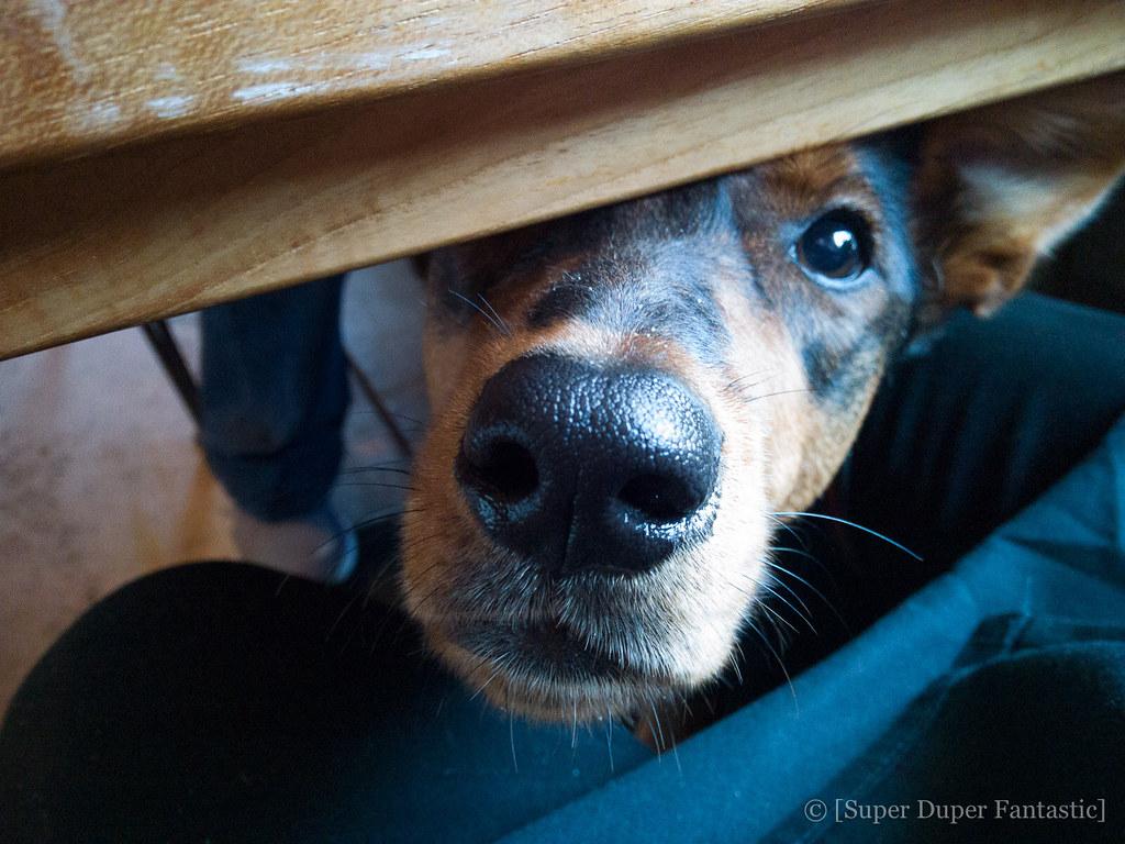 Dog-friendly Carmel-by-the-Sea: Tarpy's