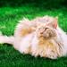 My Leo by Leo a Mia