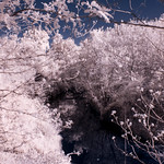 Infrared Texas 2017 (22 of 29)