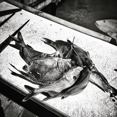 #fishing #deepseafishing #florida