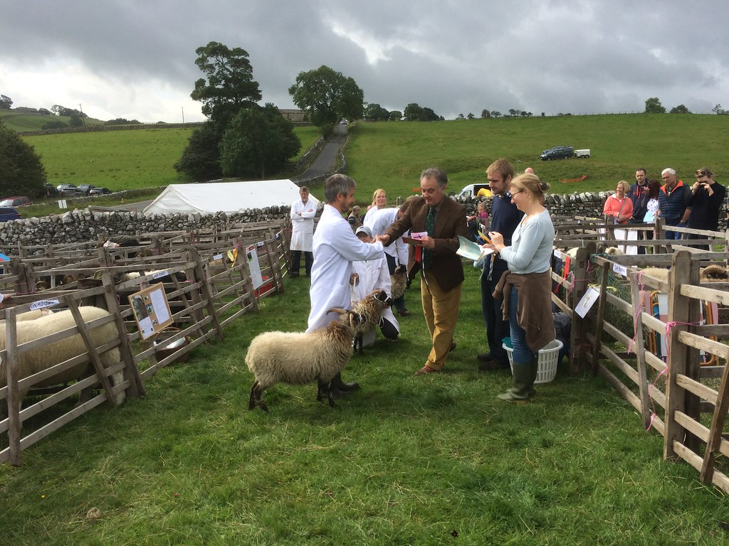 Fulvia (and Dan) winning First Prize for Primitive Rare Breed ewe