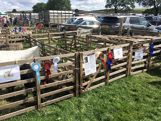 Our rosettes on the pens