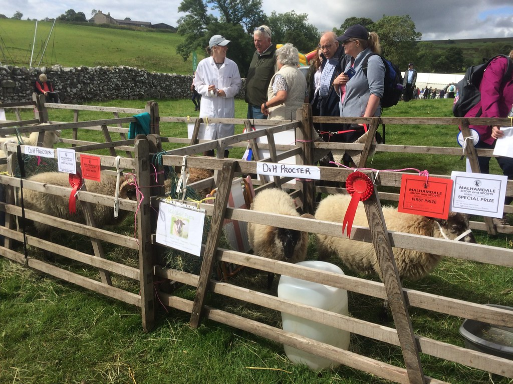 Our sheep pens displaying the rosettes